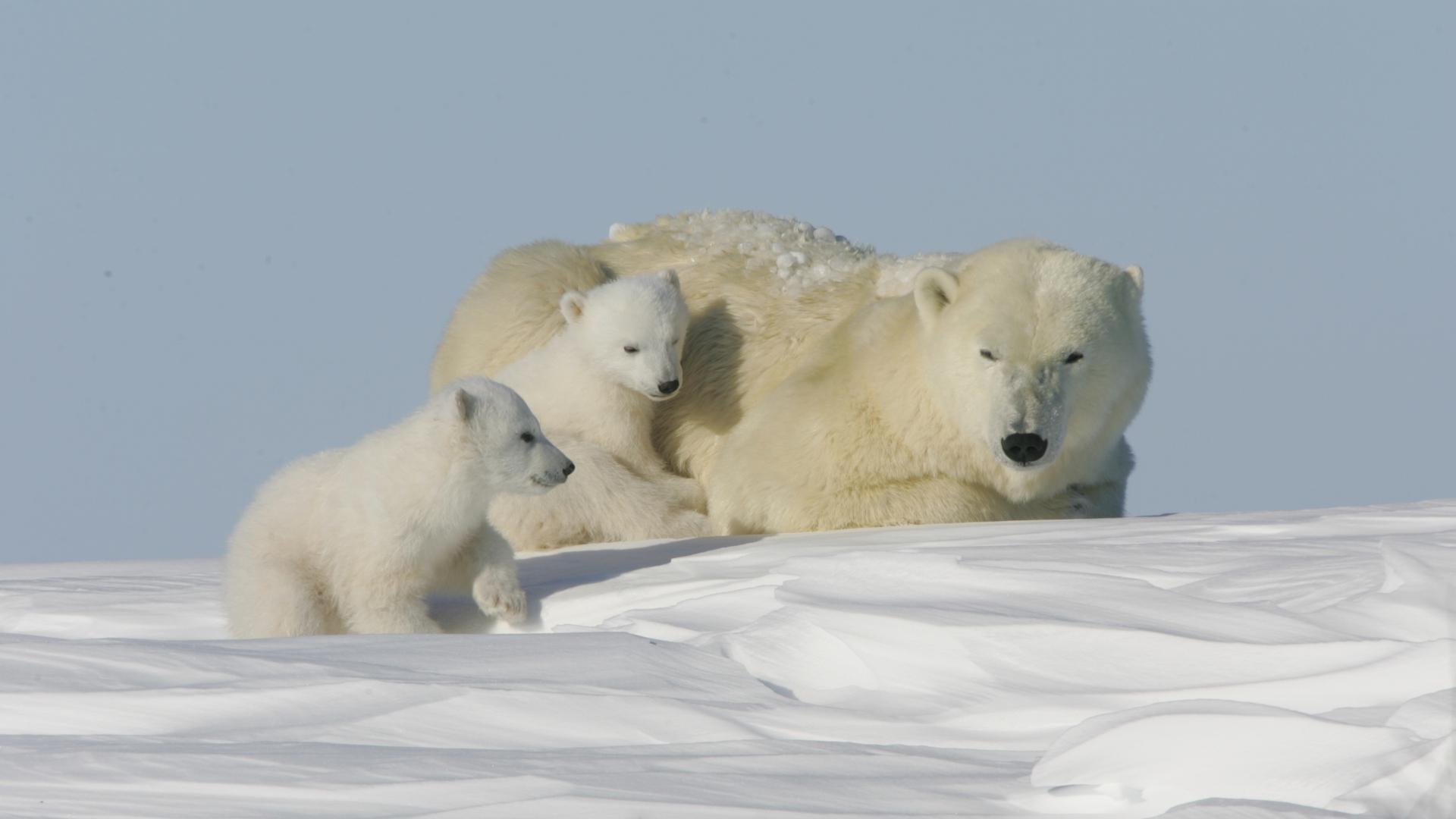 Climi polari