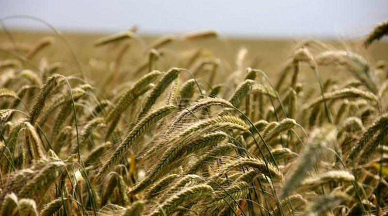 Consociazione agricola