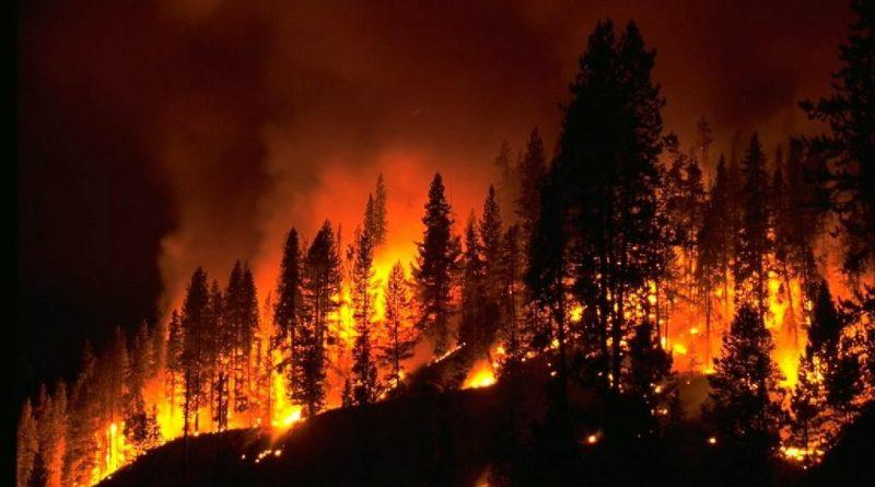 Incendi – Un Errore Ecologico