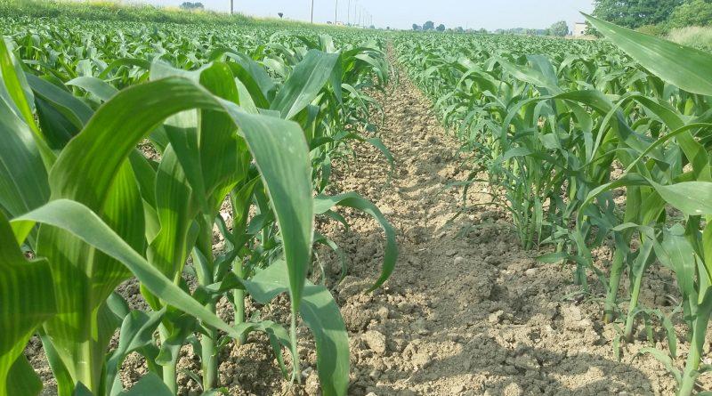 Consumo di Fertilizzanti nel Mondo