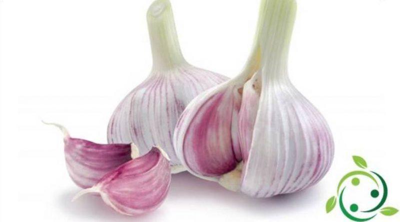 Insetticida naturale a base di aglio