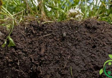 Earthworm humus: health and ecological benefits