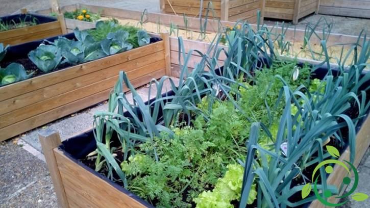 Cómo Hacer Un Jardín En Casa