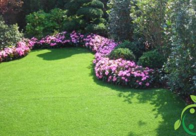 How to make a lawn in the garden