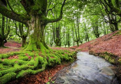 Europe – Forests increase but breathe less
