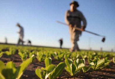 Riutilizzo delle acque reflue in agricoltura