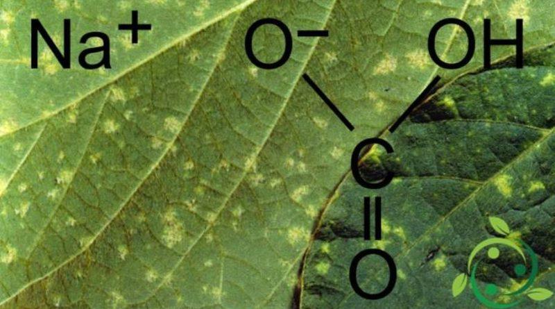 Bicarbonato di sodio come fungicida naturale