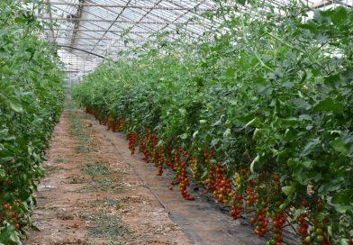 Le coltivazioni in serra bruciano il pianeta