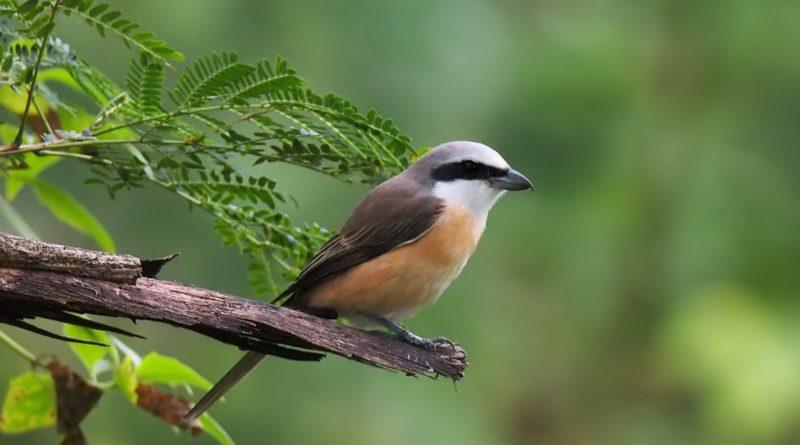 vertiginosa diminuzione degli uccelli