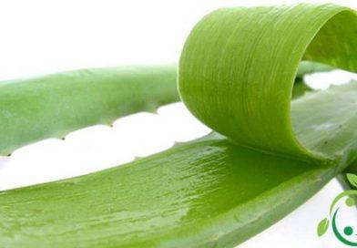 Come preparare il succo di Aloe vera