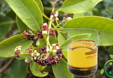Olio essenziale di Sandalo – proprietà ed usi
