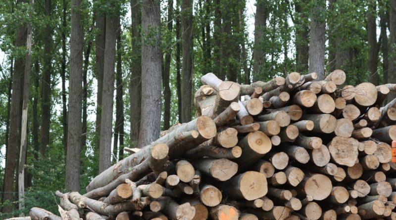 Energia dalle biomasse