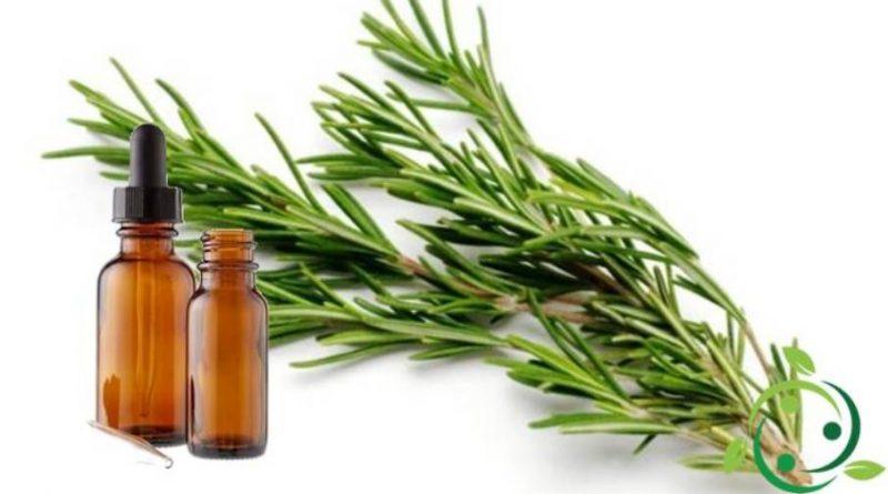 Olio essenziale di Rosmarino – Usi e Proprietà