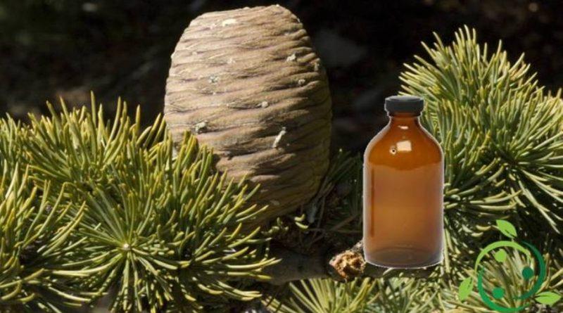 Olio essenziale di Legno di Cedro – Usi e proprietà