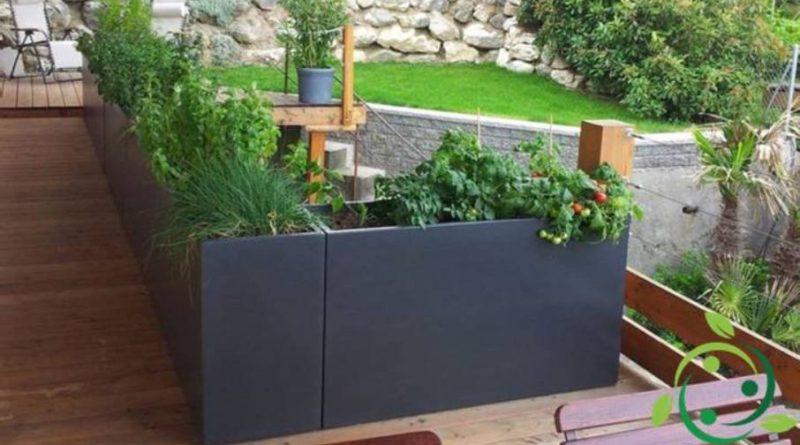 Come coltivare le piante aromatiche nel terrazzo