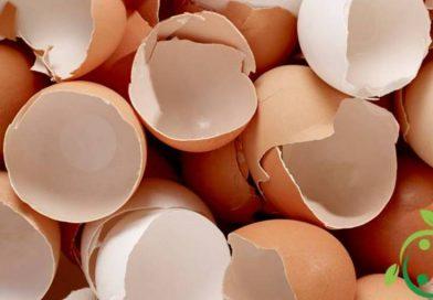 Concime naturale con i gusci d'uovo