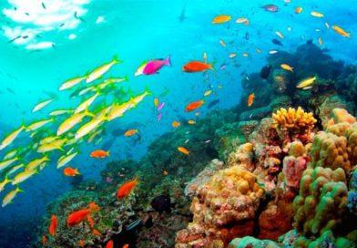 Gli oceani perdono ossigeno