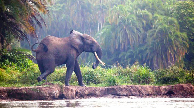 Foresta Pluviale del Congo