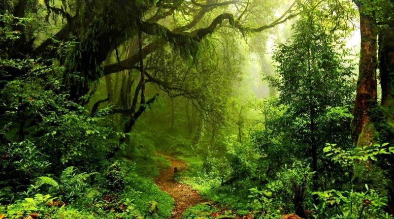 Foresta pluviale dell'Amazzonia