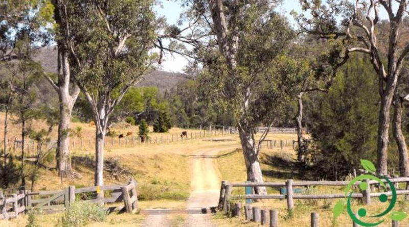 Coltivazione e proprietà dell'Eucalipto