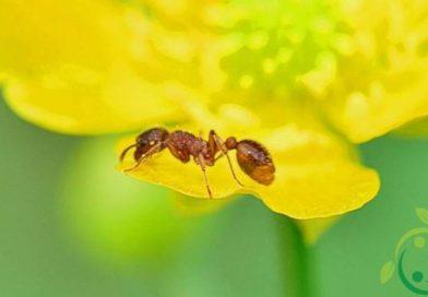 Ruolo ecologico delle formiche