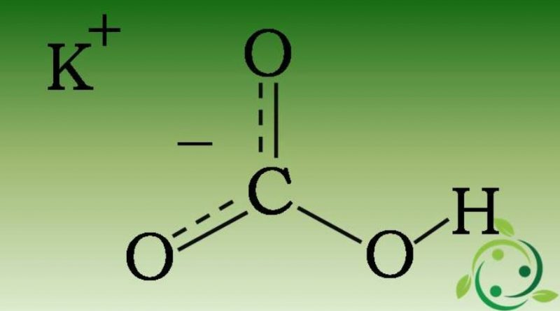 Bicarbonato di potassio come fungicida naturale