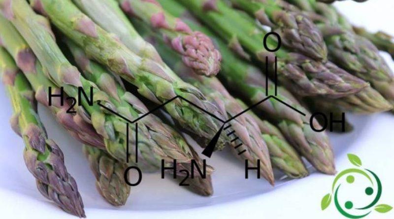 L'asparagina