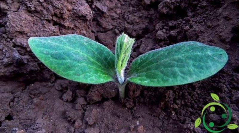 Ruolo del cloro nelle piante