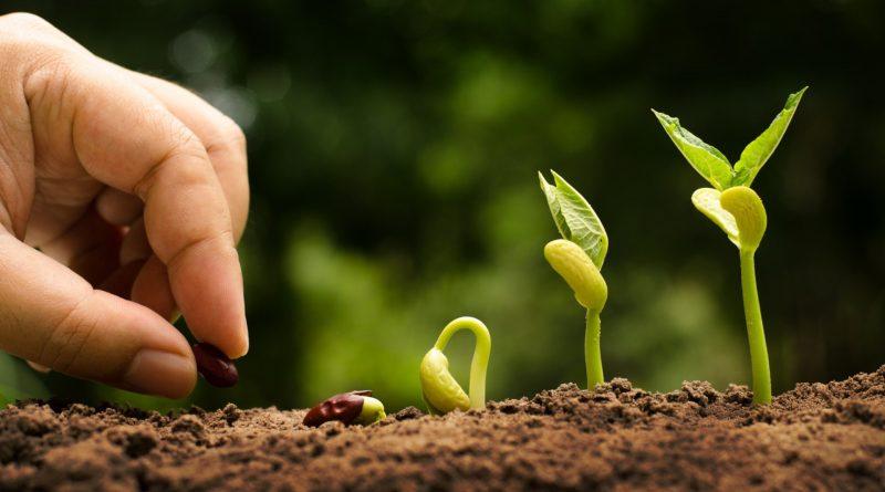 Desertificazione: Processo Inarrestabile?
