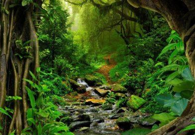 Foresta pluviale tropicale di Xishuangbanna