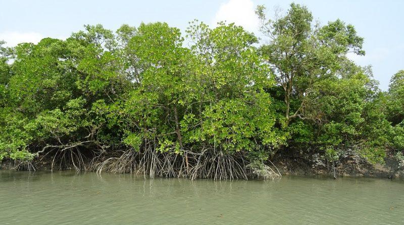 Foresta di Sundarbans