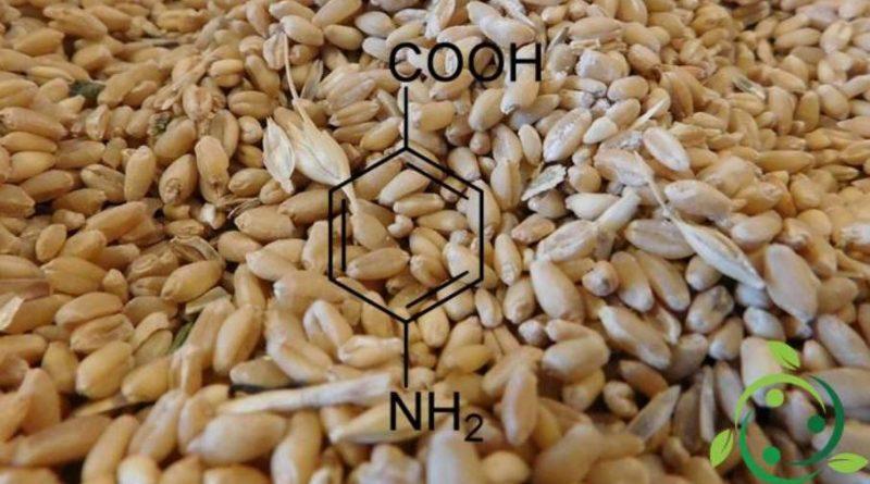 Acido 4-amminobenzoico
