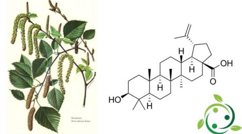 Acido betulinico