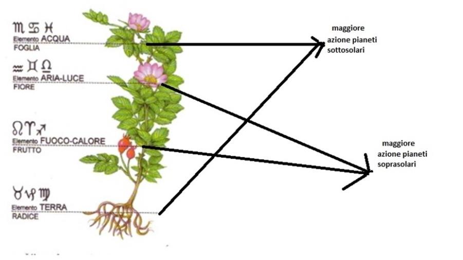 piante e sistema solare