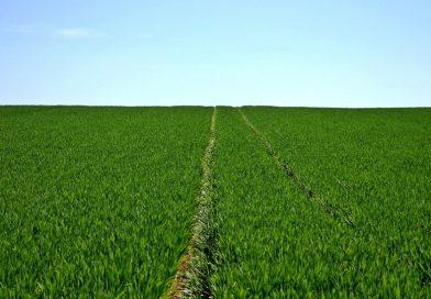 Riscrivere la Politica Agricola mondiale