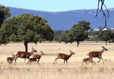 Parco nazionale di Cabañeros