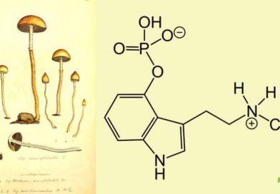 Baeocistina
