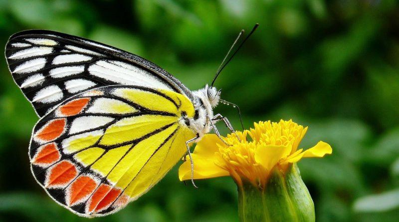 La straordinaria vita delle farfalle