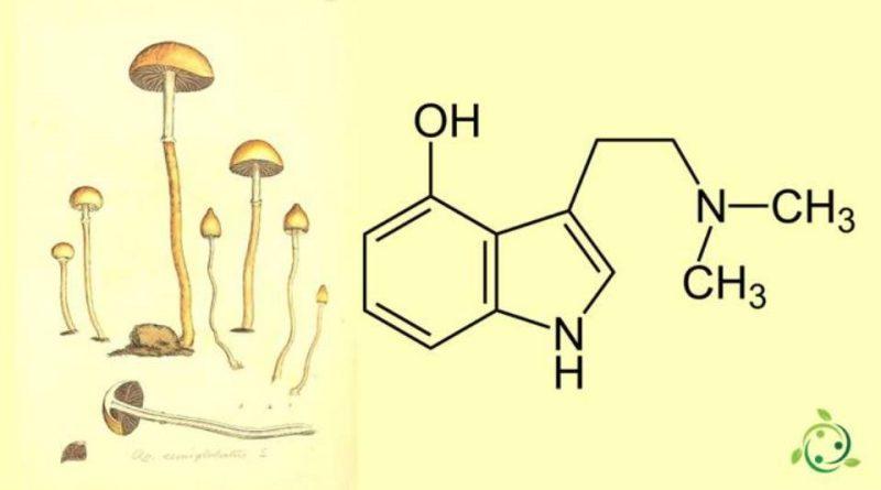 Psilocina