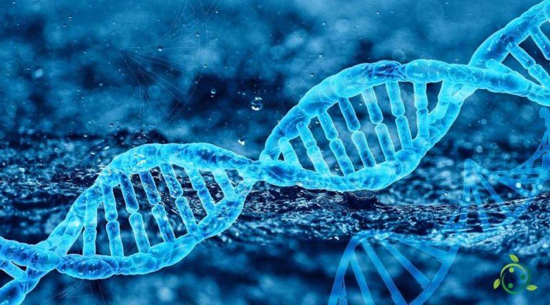 Citogenetica