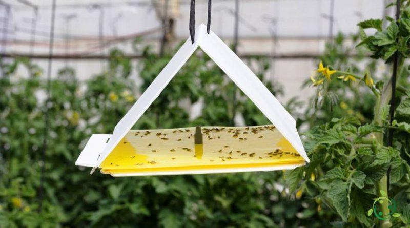 Trappole per monitoraggio insetti