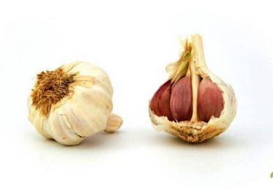 Macerato di aglio