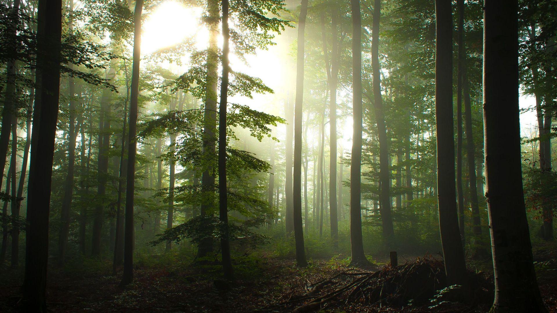 Foreste e Ricchezza