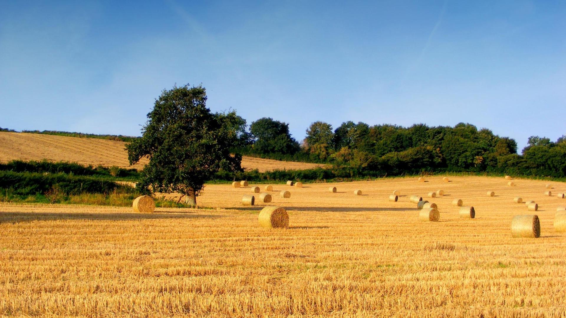 Inefficienza dell'Agricoltura Moderna