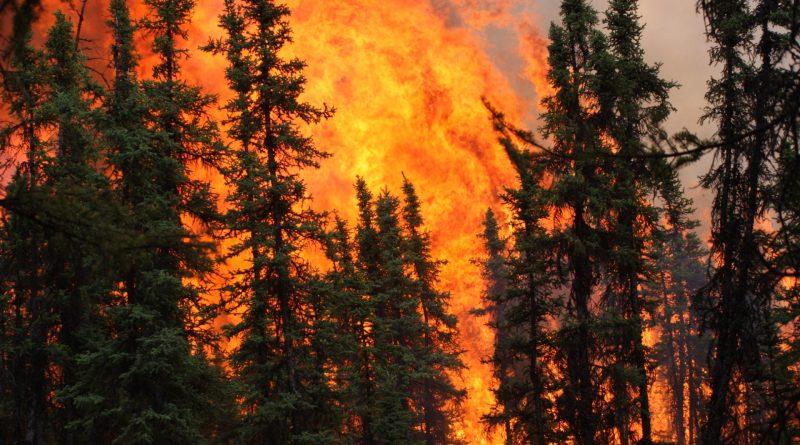 Aumento degli incendi boschivi