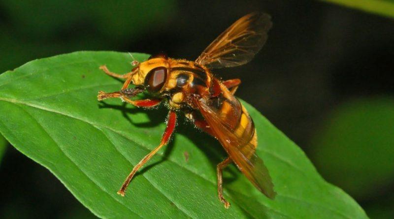 Come allevare insetti utili in azienda