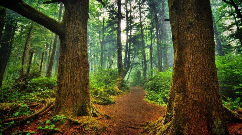 Una foresta distrutta non si può ricostruire