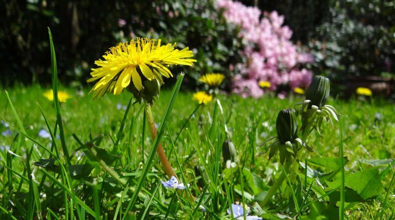 Italia, prima in Europa per biodiversità
