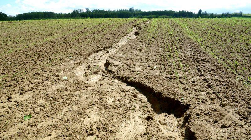 Pesticidi ed erosione del suolo