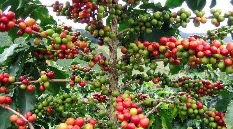Madreterra Caffé